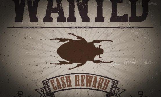 Bug Bounty_1