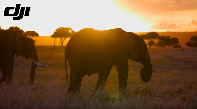 Kenya's Mara Elephant Project using DJI Drones to keep animals safe